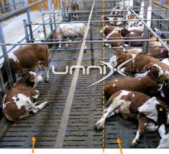 Gumeni Podovi za Krave-Cubicle |Podloge| :Ležista:| Tov| Farme | Bikovi